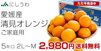 清見オレンジ ご家庭用
