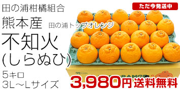 トップオレンジ不知火