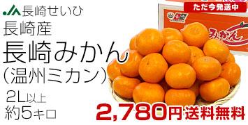 長崎みかん 2L