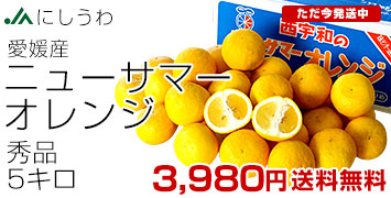 ニューサマーオレンジ 秀品