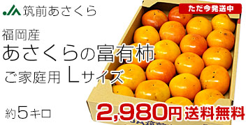 あさくらの富有柿ご家庭用