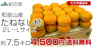 紀の里柿 7.5キロ