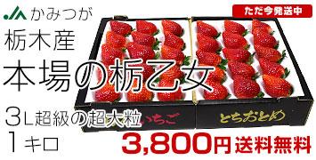 本場の栃乙女3L