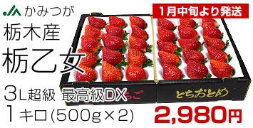 栃乙女いちごDX