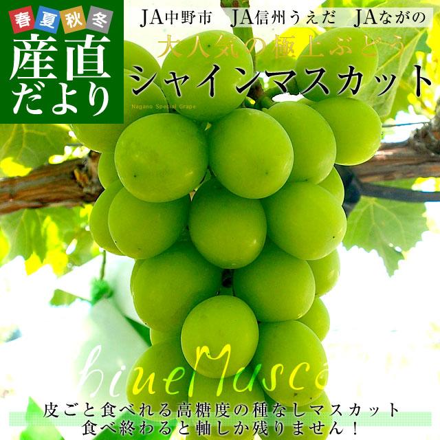 長野県産 シャイン