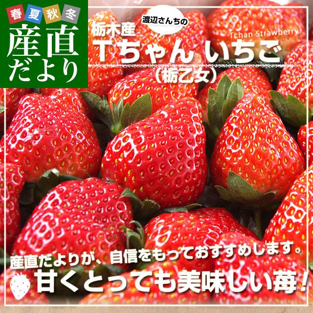 Tちゃんイチゴ