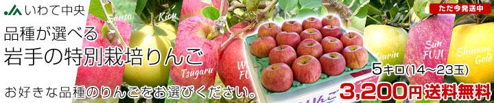 特別栽培りんご 5キロ