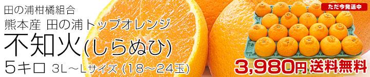 田の浦不知火(しらぬひ)