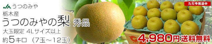 宇都宮レギュラー梨