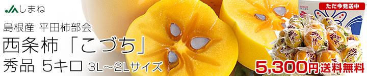 西条柿5キロ