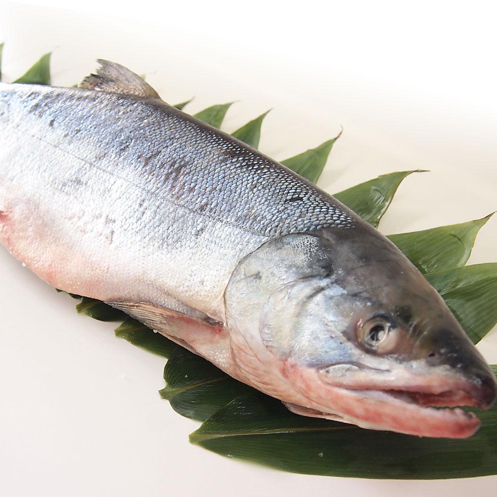 北海道産 新巻鮭 1尾2キロ