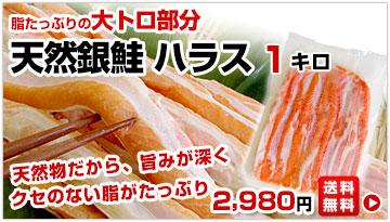 銀鮭ハラス