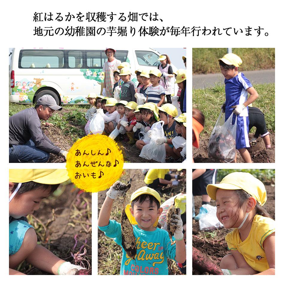 幼稚園の芋堀にも使われるた畑