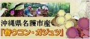 沖縄県名護市産 春ウコン ガジュツ