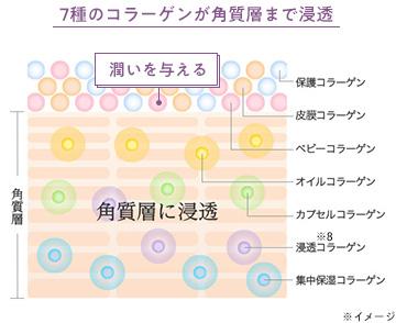 7種のコラーゲンが角質層まで浸透