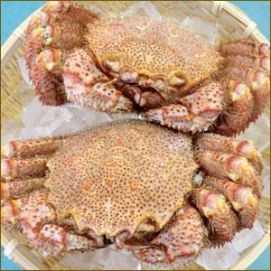 北海道 毛蟹