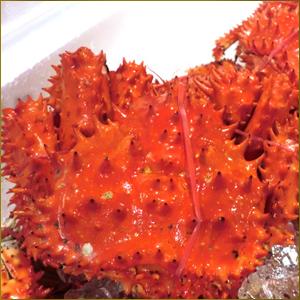 北海道産 花咲蟹 姿 1kg前後 1尾【北海道】【花咲蟹】