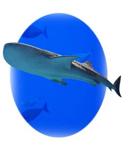 マリンゴールド 深海鮫 無添加 スクワレン スクアラミン DHC