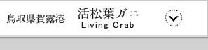 かに 松葉蟹 まつばがに 松葉がに 鳥取 ゆで