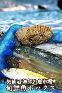 気仙沼 鮮魚セット