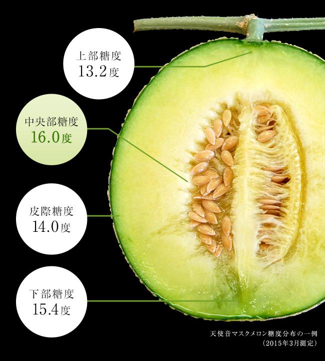 通常のメロンの出荷基準は14度以上とされる中、天使音メロンは糖度16度