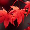 紅葉が綺麗な木