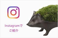 Instagramでご紹介