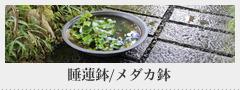 睡蓮鉢/メダカ鉢