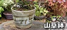 信楽焼き山草鉢