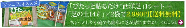 「ぴたっと貼るだけ!西洋芝」1シート +「芝の土14リットル」×2袋で2,980円【送料無料】 ちょっとした小庭でも簡単に芝が貼れますよ!くわしくはこちら→