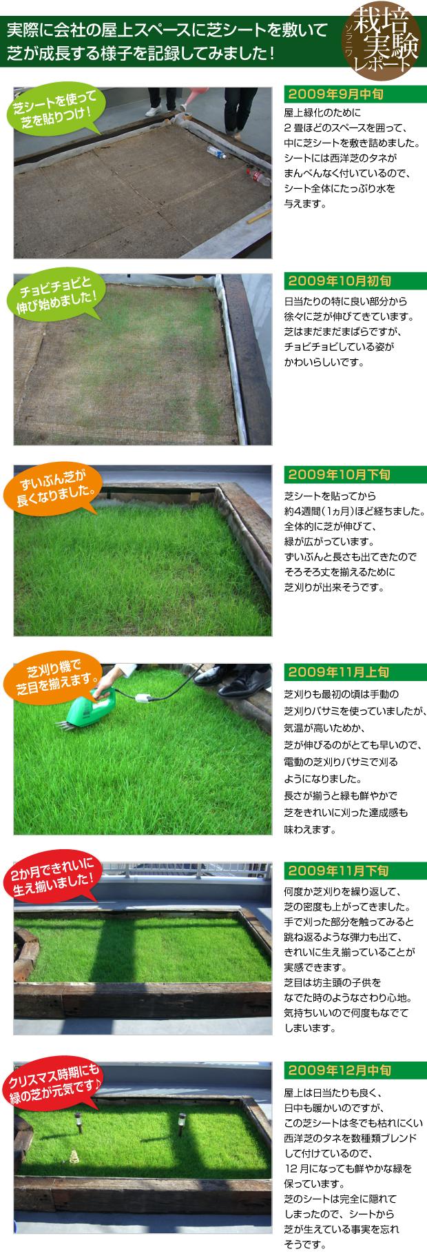 実際に会社の屋上スペースに西洋芝シートを敷いて芝が成長する様子を記録してみました!