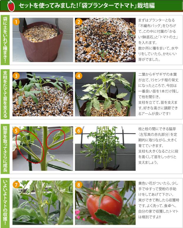 トマト栽培編