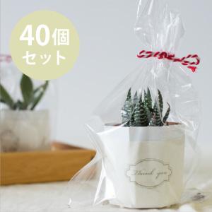 多肉植物40個セット