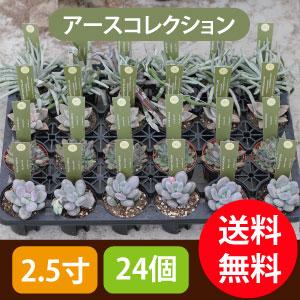 多肉植物2.5寸24個セットアースコレクション