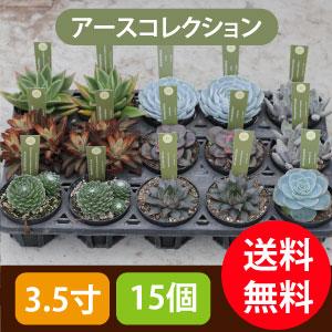 多肉植物3.5寸15個セットアースコレクション