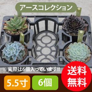 多肉植物5.5寸6個セットアースコレクション