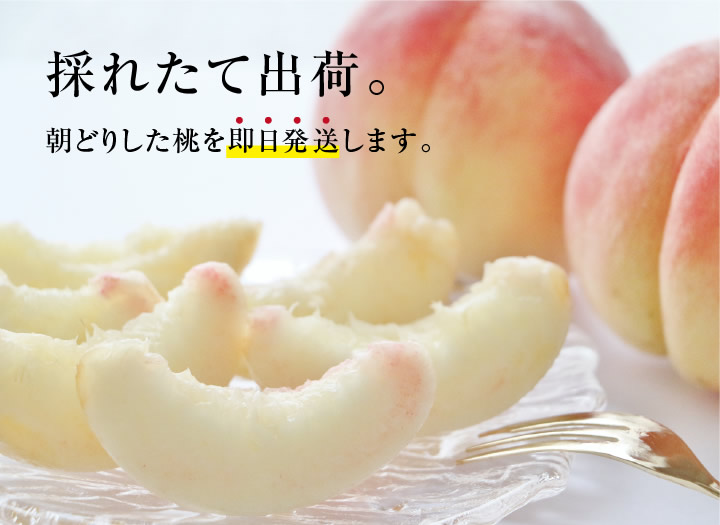 【送料無料】長野産 桃(もも)5kg。産地直送にてお届け。もぎたて新鮮!極上桃(あかつき)