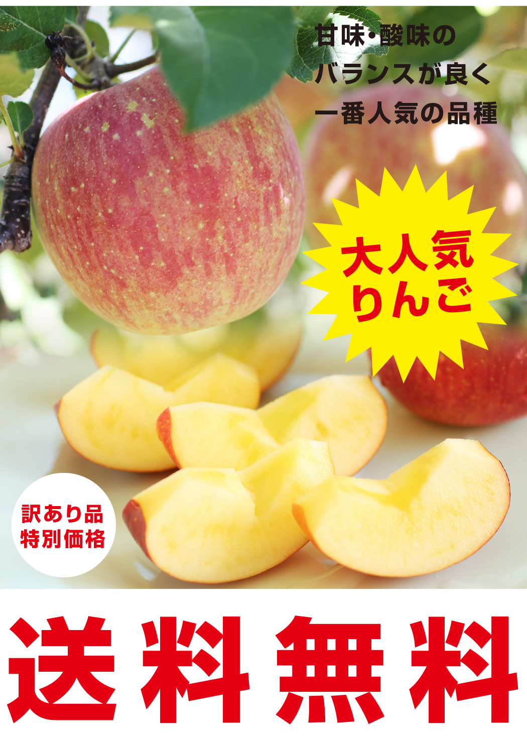 大人気りんごが送料無料