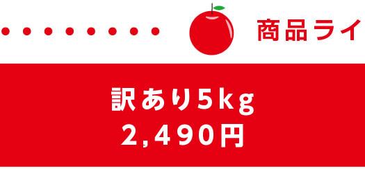 長野県産訳ありりんご(サンふじ)5キロ