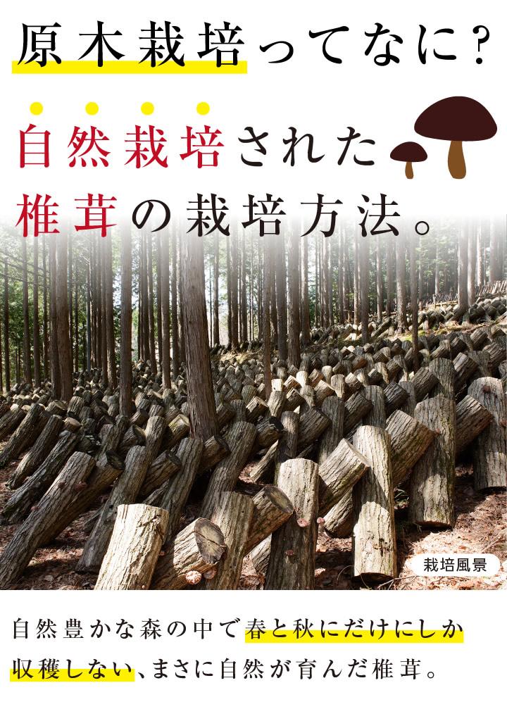 原木栽培とは椎茸の栽培方法。無農薬