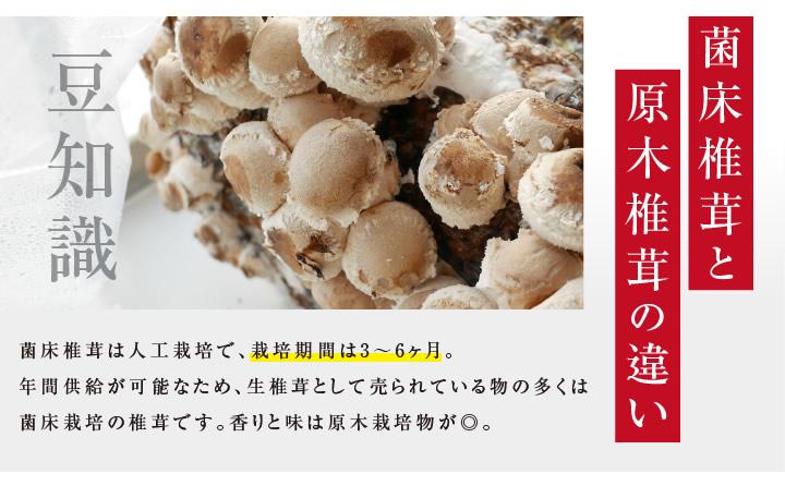 菌床椎茸と原木椎茸の違い