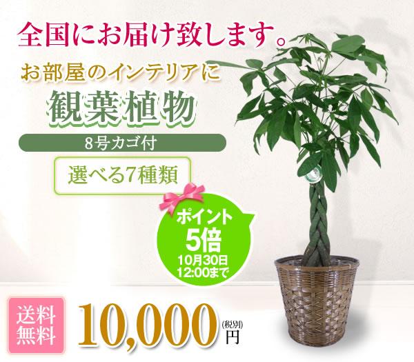 観葉植物10000円