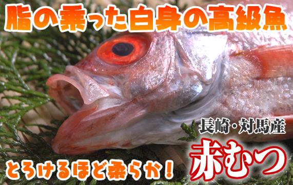 脂の乗った白身の高級魚