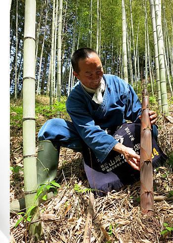 無農薬で育つ虎竹