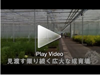 ベルギーOprins社で成育される竹たち