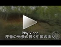 中国の竹林風景