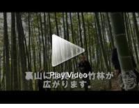 中国の竹林にて