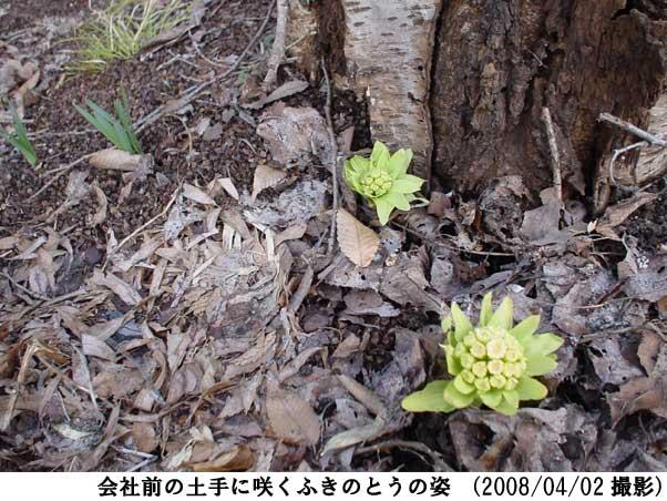 2008/04/02撮影