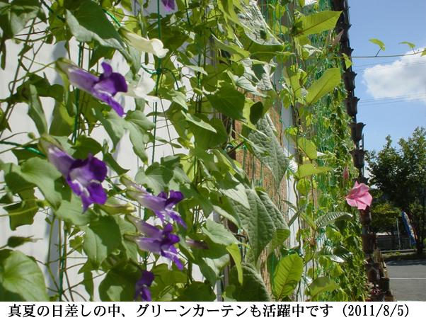 2011/08/05撮影
