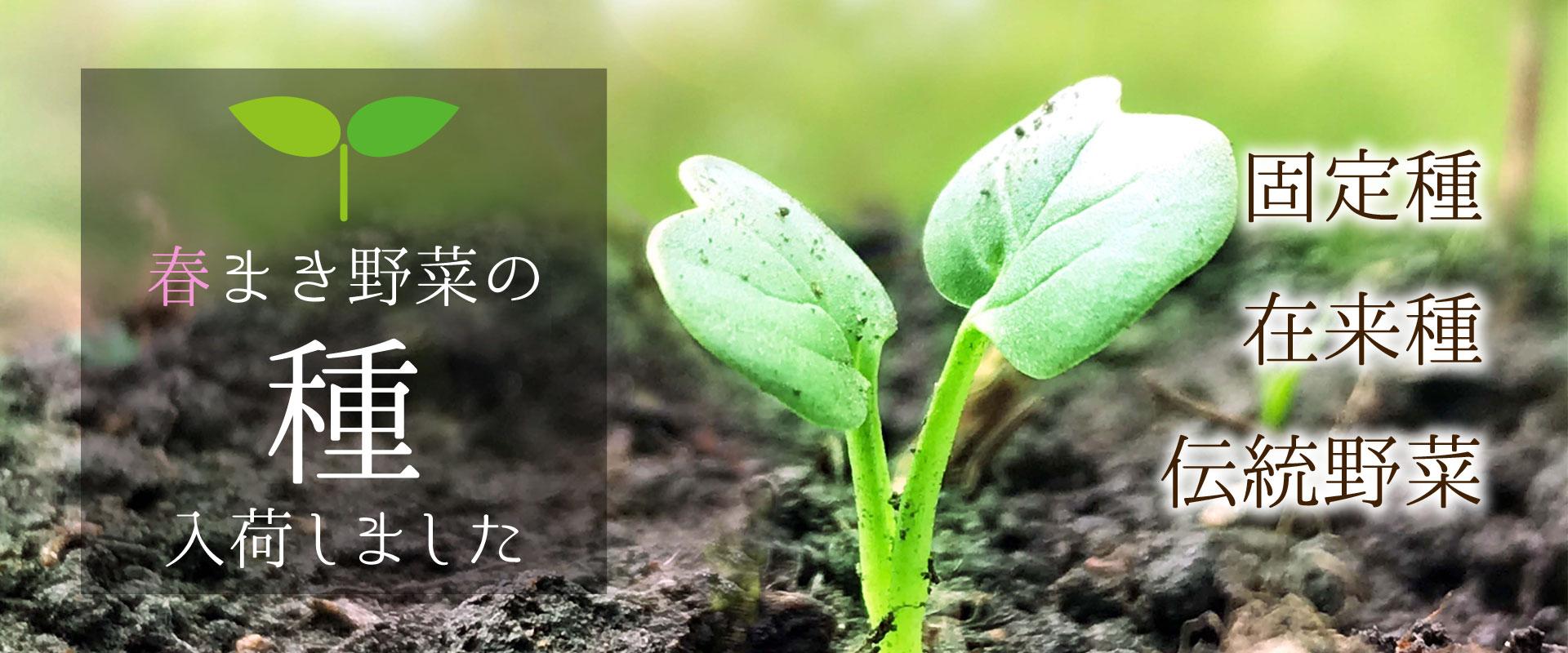 春まき野菜の種 入荷しました! 固定種・在来種・伝統野菜